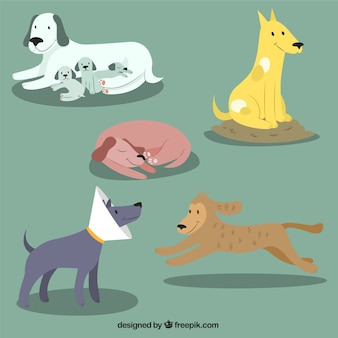 Lovely dog illustrations