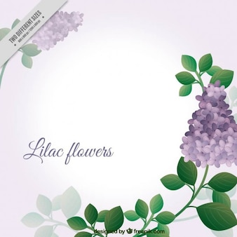Lovely lilac flowers background