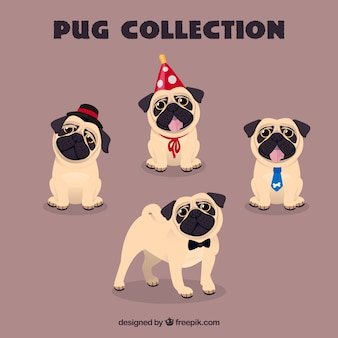 Lovely pugs with funny elements