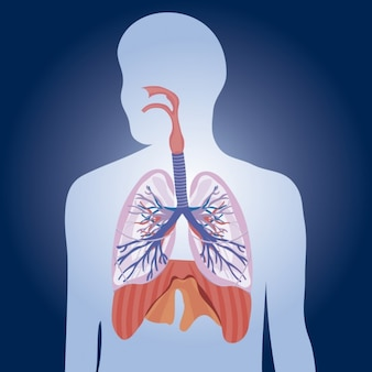 Lungs Physiology Illustration