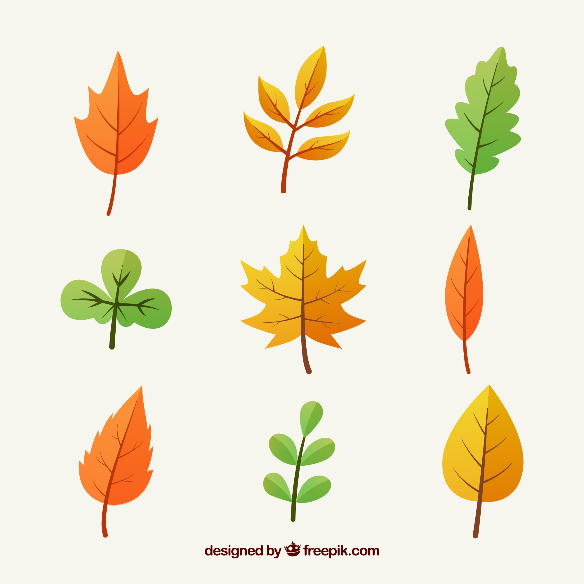 Multicolor autumn leaves collection