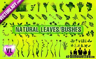 Natural Leaves Bushes Silhouettes