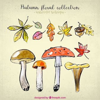 Nature collection for autumn in watercolor