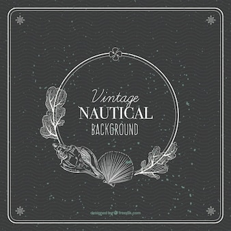 Nautical background with seaweed and shells