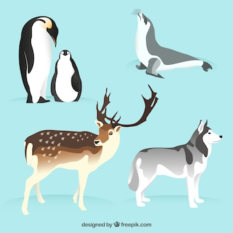 nice arctic animals