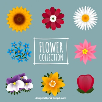 Nice collection of eight flowers