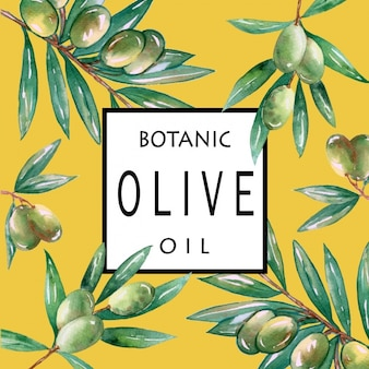 Olive branches background