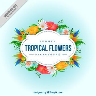 Ornamental tropical flowers background