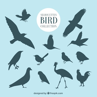 鳥のコレクションを概説