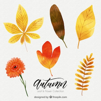 Pack of autumn leaves watercolor