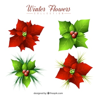 Pack of christmas flowers and mistletoe