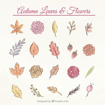 Pack of colorful autumnal flowers