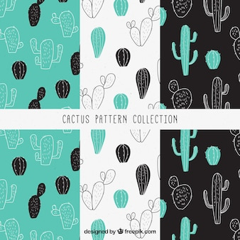 Pack of decorative patterns with cactus sketches