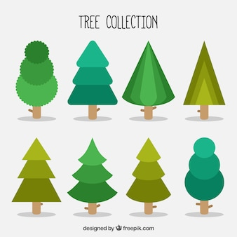 Pack of different trees and pines in flat design
