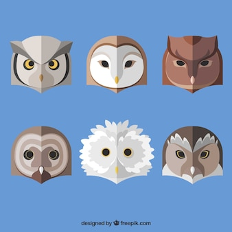Pack of ethnic owls in flat design
