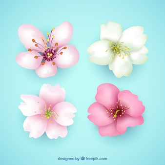 Pack of four pretty flowers in realistic style