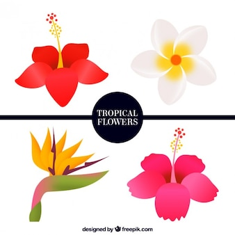 Pack of four tropical flowers