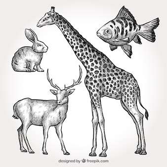 Pack of hand drawn giraffe with other animals