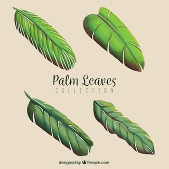 Pack of hand-drawn palm leaves