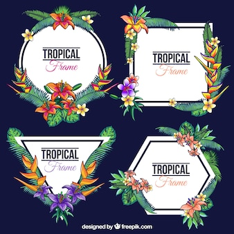 Pack of hand-drawn tropical frames
