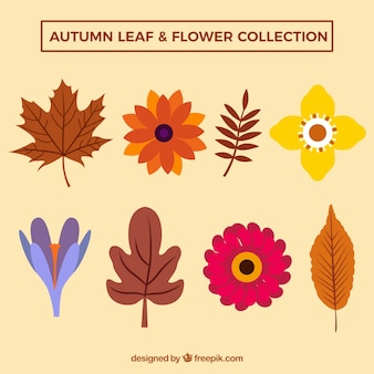 Pack of leaves and flowers in flat style