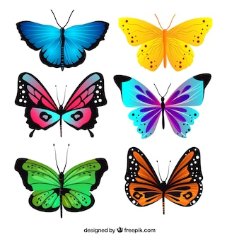 Pack of realistic butterflies with different colors