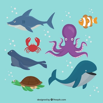 Pack of sea animals swimming