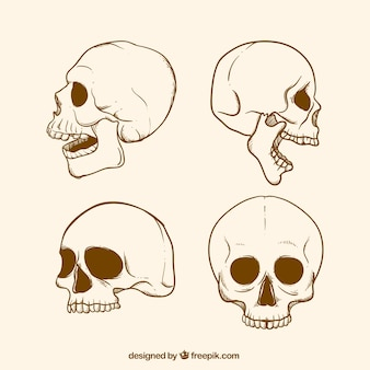 Pack of skull sketches