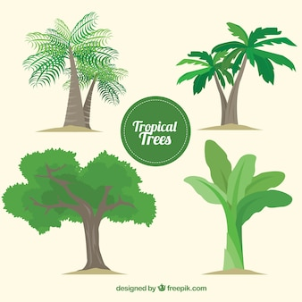 Pack of tropical trees