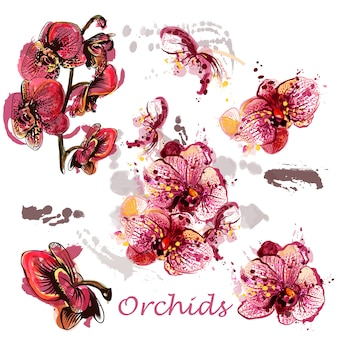Pack of watercolor orchids