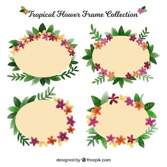Pack tropical flower frames