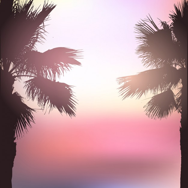 Palm tree landscape background with blurred effect