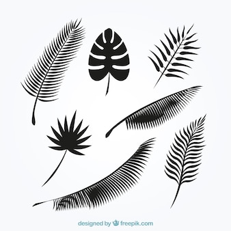 Palm tree leafs silhouettes collection