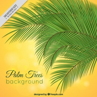 Palm trees on a yellow background