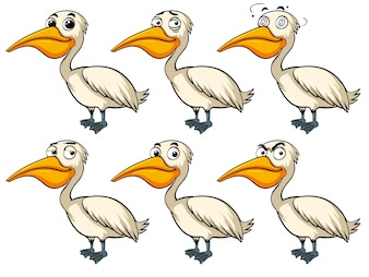 Pelican bird with different emotions