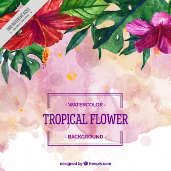 Pink tropical flowers background
