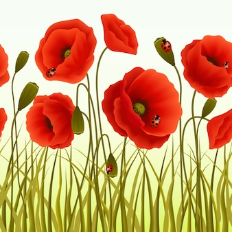 Poppies background with ladybugs