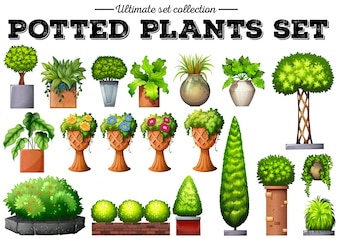 Potted plants in the garden illustration