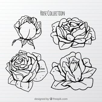 Pretty collection of hand-drawn roses