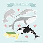 Pretty pack of ocean animals