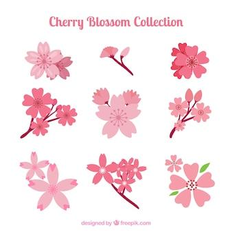 Pretty spring cherry blossoms