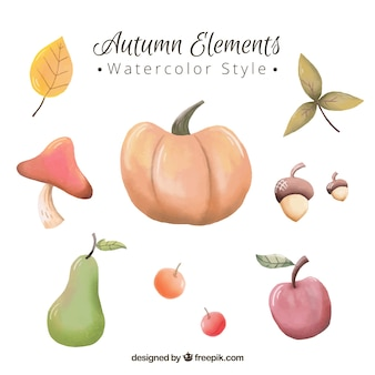 Pumpkin and other natural watercolor elements