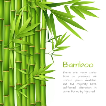 Realistic bamboo background