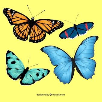 Realistic butterflies pack