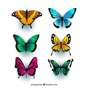 Realistic butterflies with variety of colors