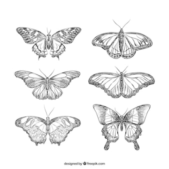 Realistic collection of hand-drawn butterflies