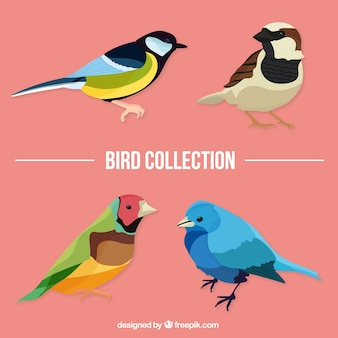 Realistic colors birds