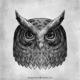 Realistic drawing of owl