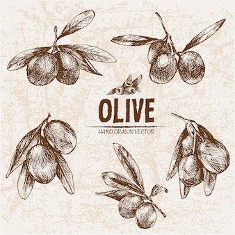 Realistic olive collection