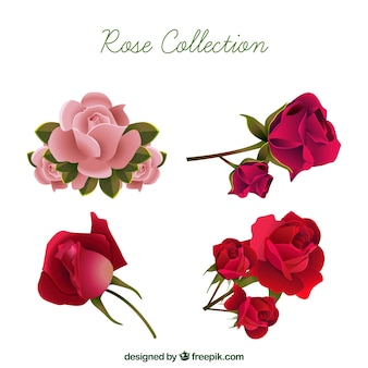 Realistic selection of pretty roses